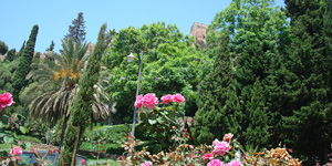 Rose garden below Alcazaba and Gibralfaro
