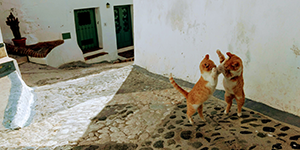 Playing cats in historic centre of Frigiliana